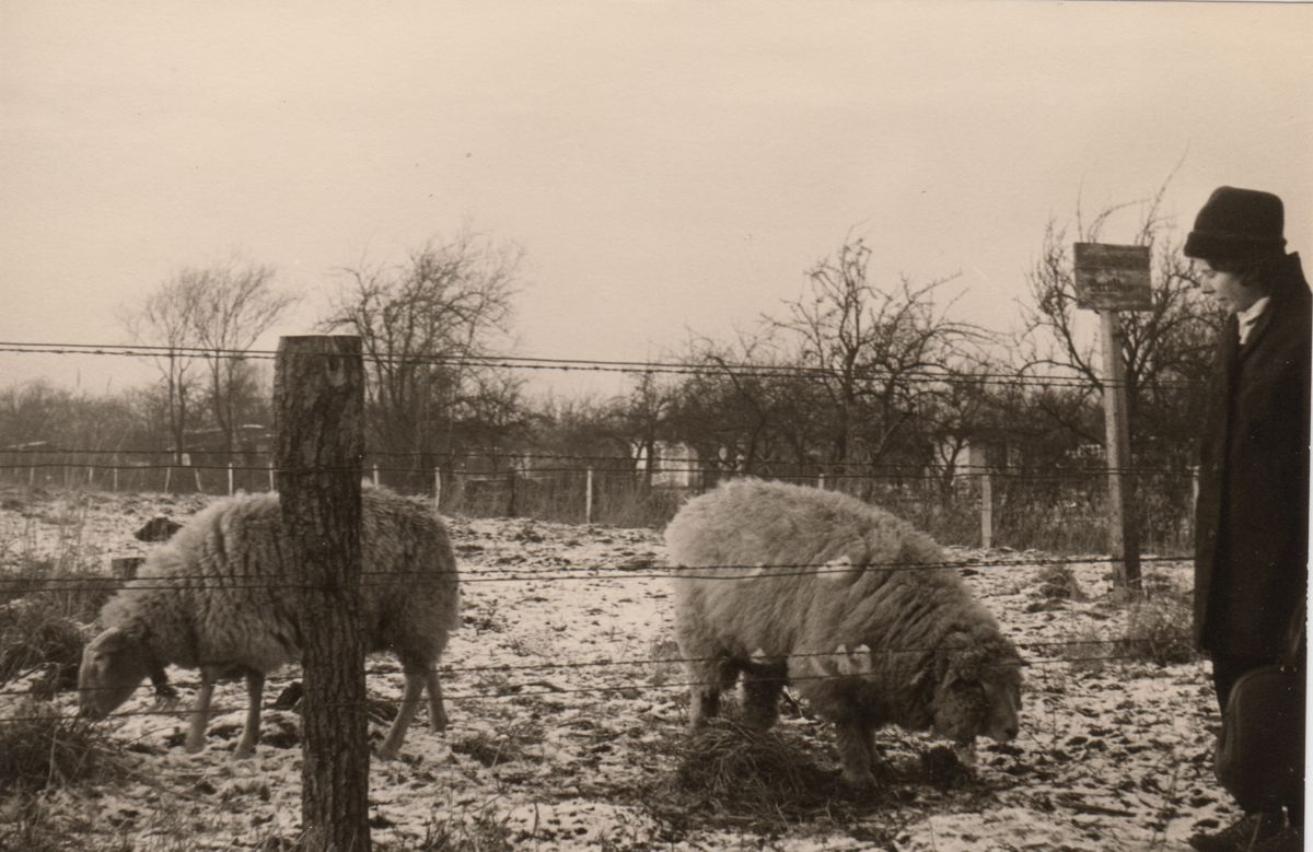 Eines meiner ersten Bilder: Meine Mutter mit Schafen